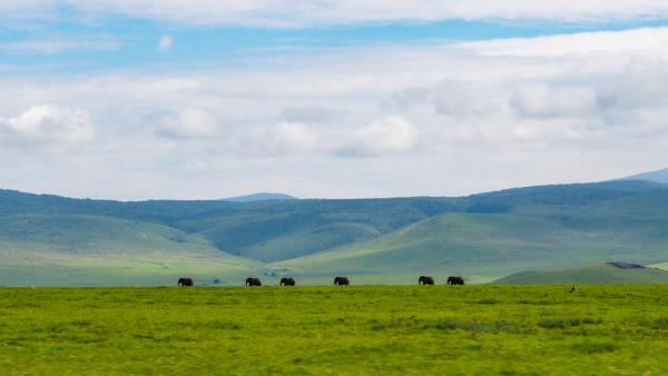 A parade of elephants in the Ngorongoro Crater