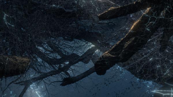 """A still from """"Fantastic Fungi."""" (Moving Art)"""