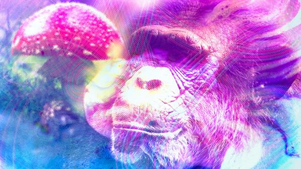 Magic mushrooms and our primate ancestors