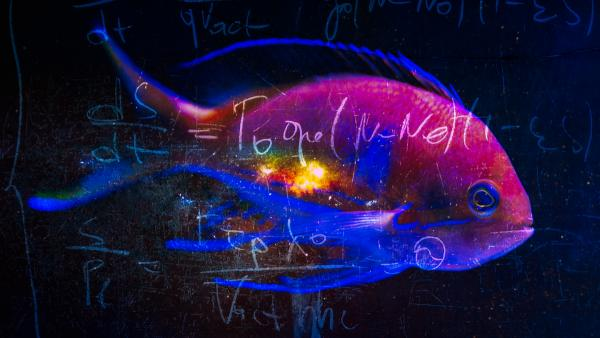 Math, biology and the other follies of man trying to explain the universe.