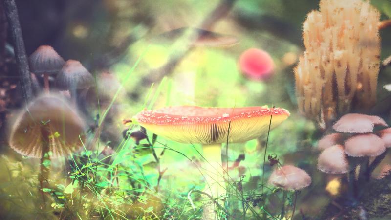 Mushroom wonder